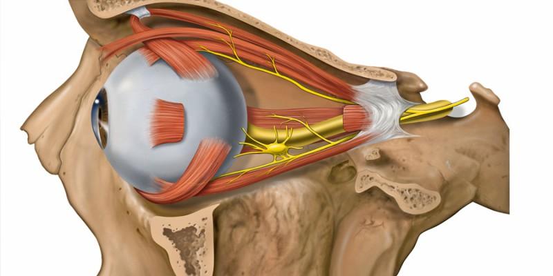 Ишемическая нейропатия зрительного нерва